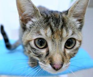 big-eyes-cat