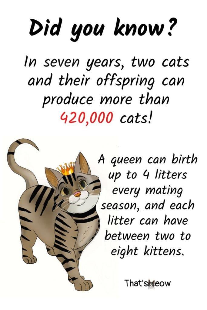 Cat breeding multiplication