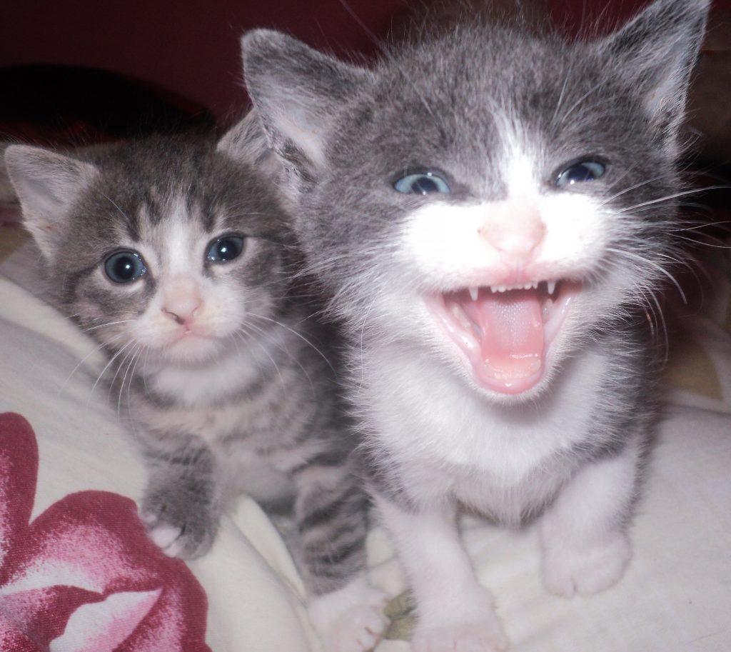 kittens meow