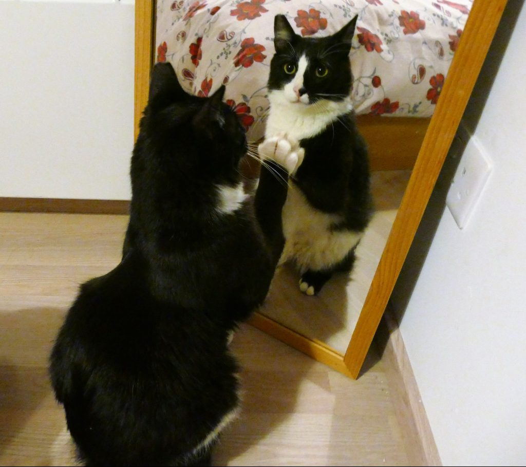 mirror paw