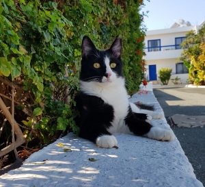 Dobby - That's Meow
