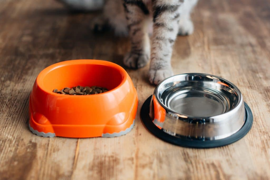 water and kibble bowls