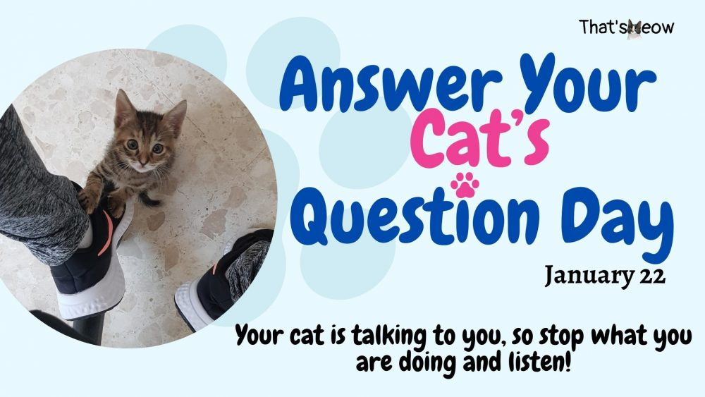 Answer Your Cats Question Day thatsmeow