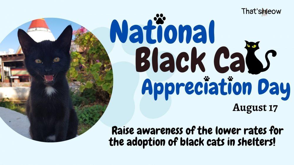 Black Cat Appreciation Day thatsmeow