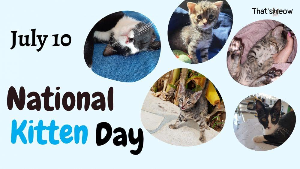 National Kitten day thatsmeow