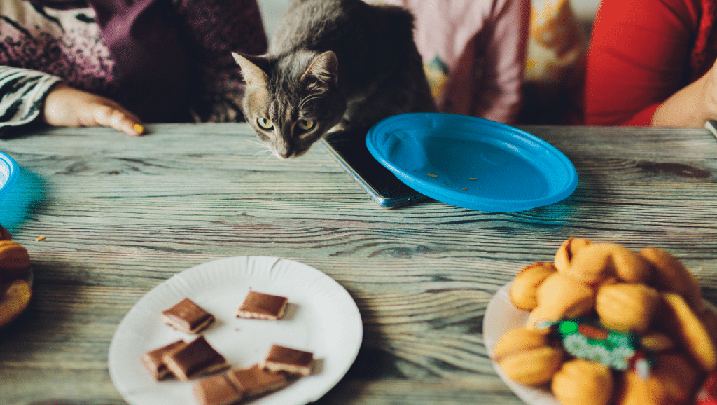 Is chocolate toxic for cats?