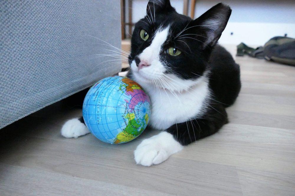 global cat day dobby thatsmeow