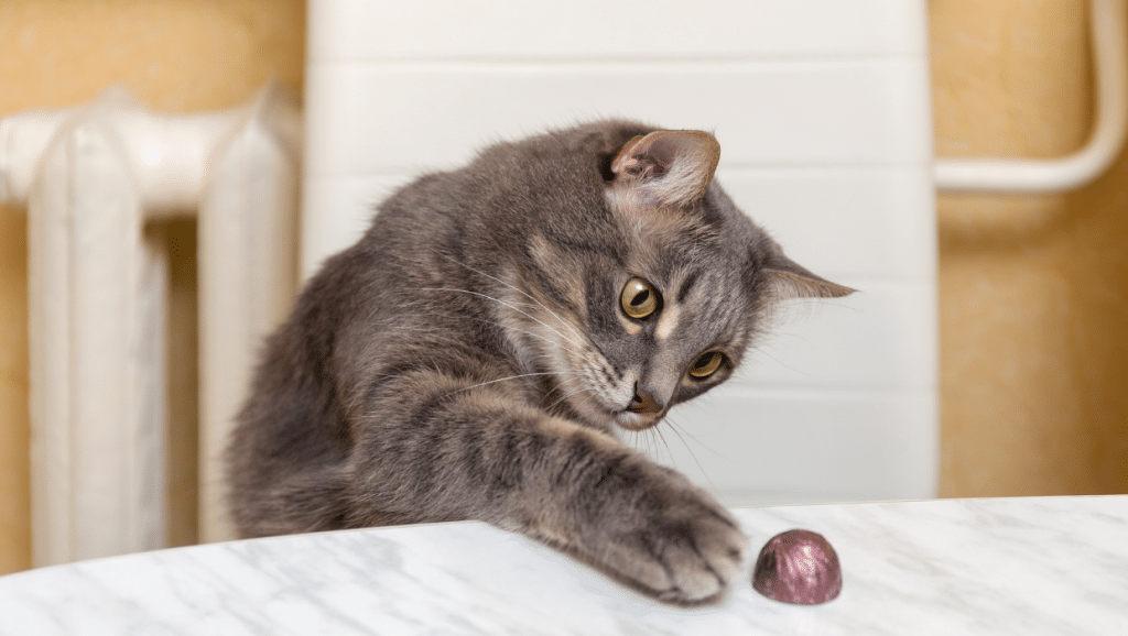 how much chocolate is bad for cats