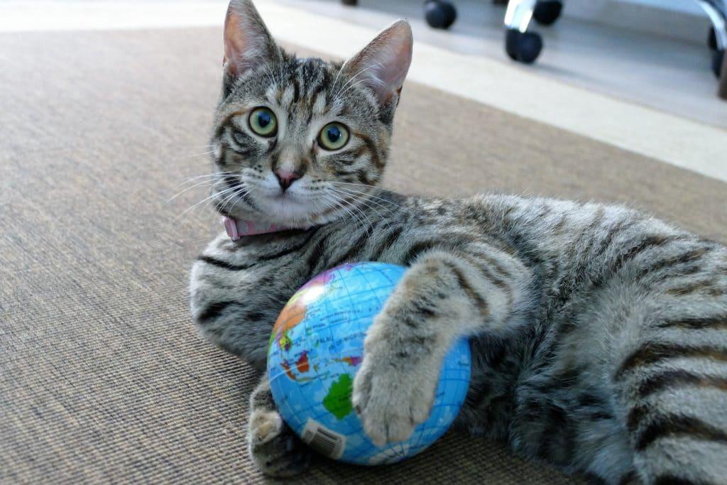 international cat day thatsmeow