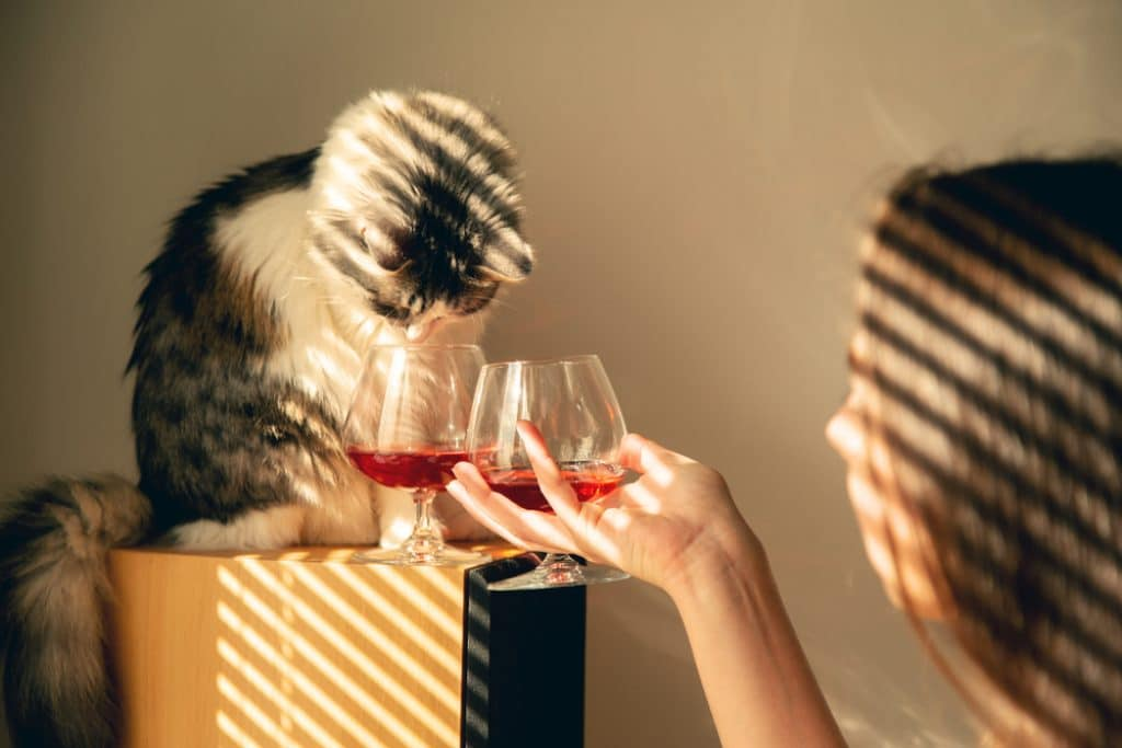 can cats drink alcohol