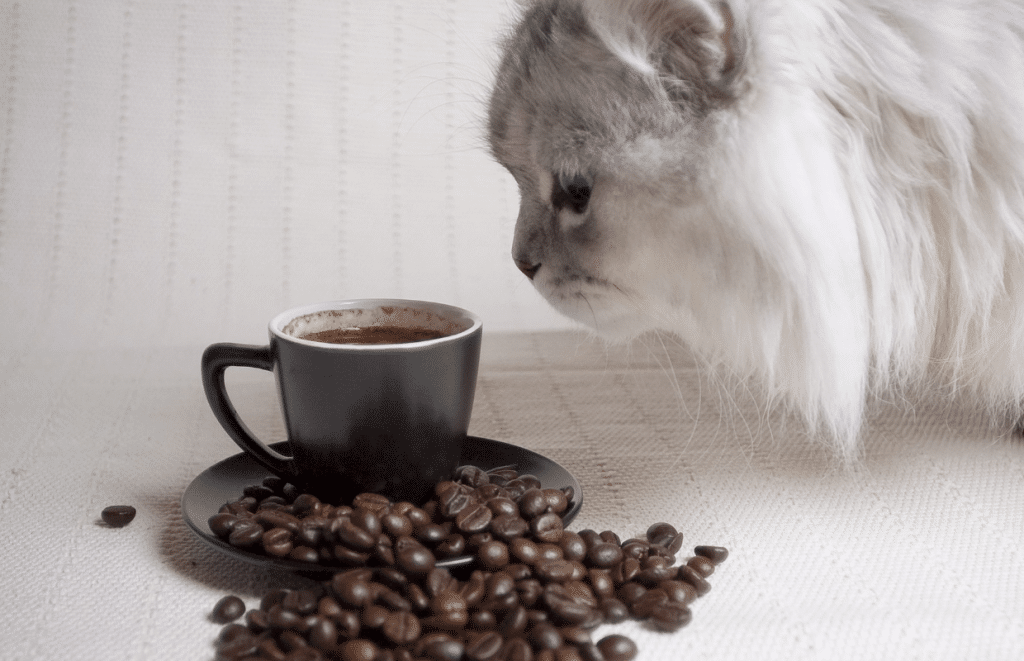 is coffee toxic to cats