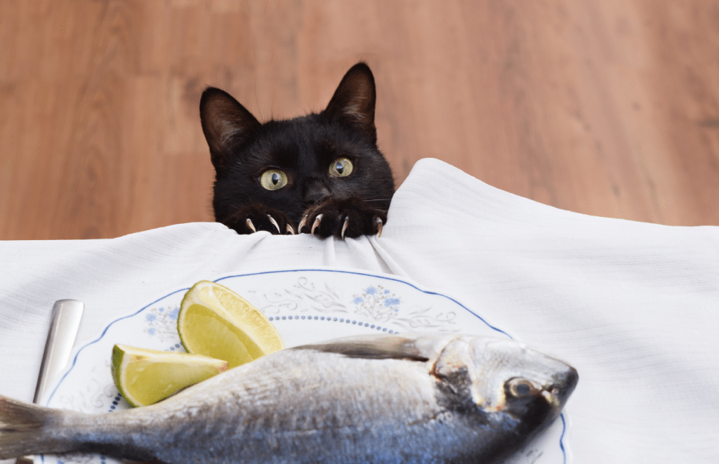 can cats eat raw fish