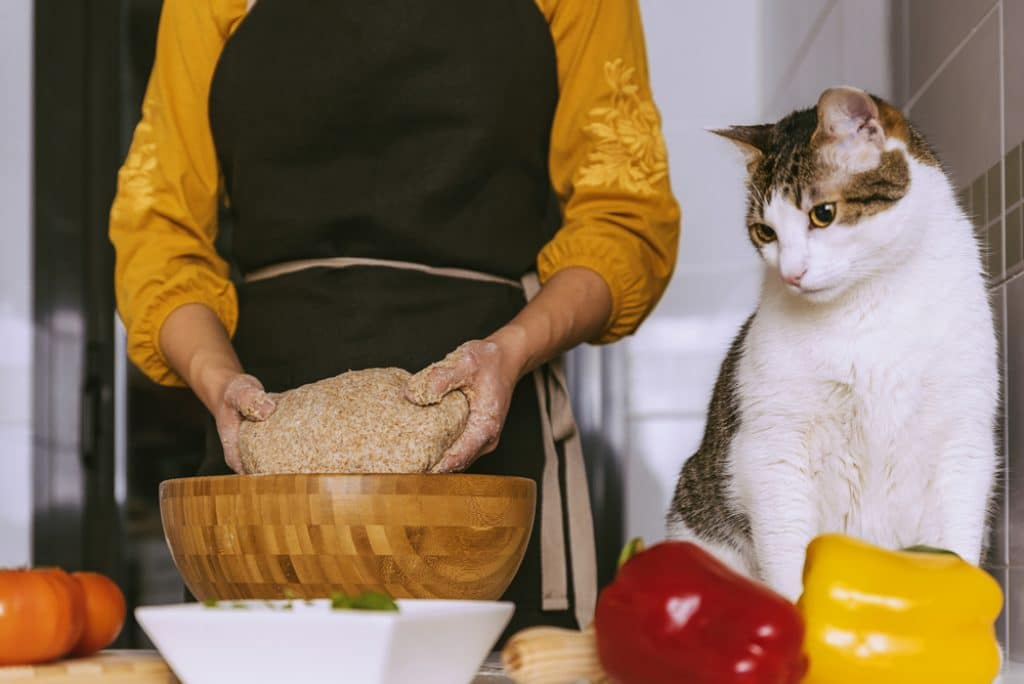can cats eat yeast dough