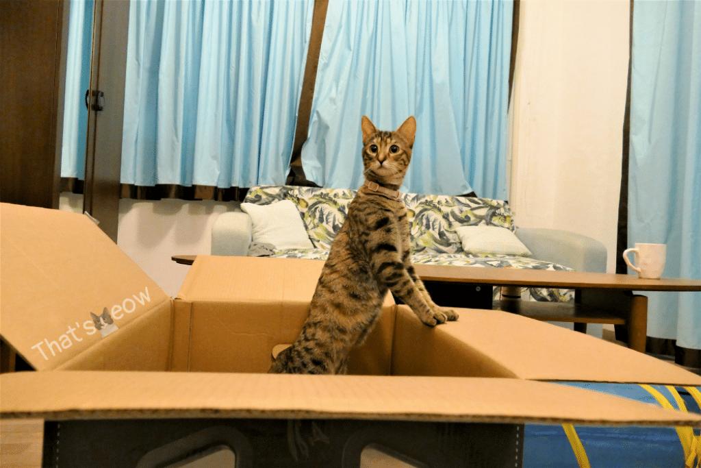 cat in big box