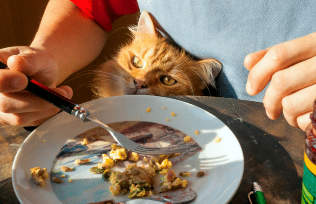 dinner with cat
