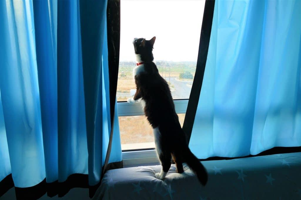 cat catches bugs