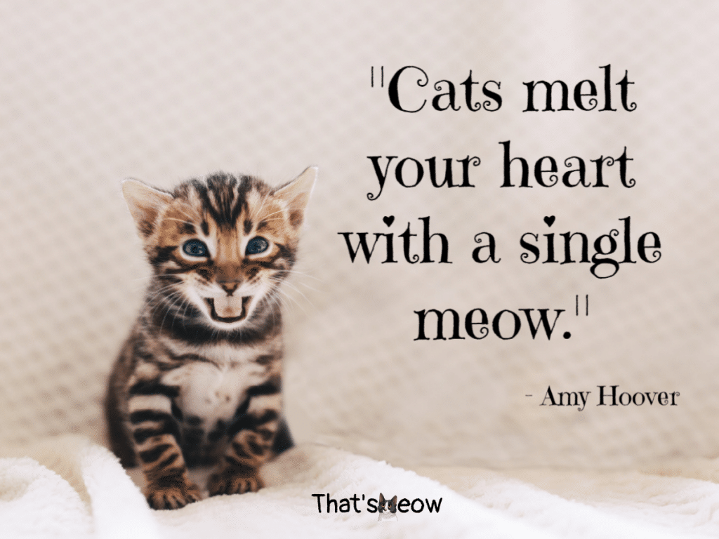 cat quotes - Cats melt your heart with a single meow