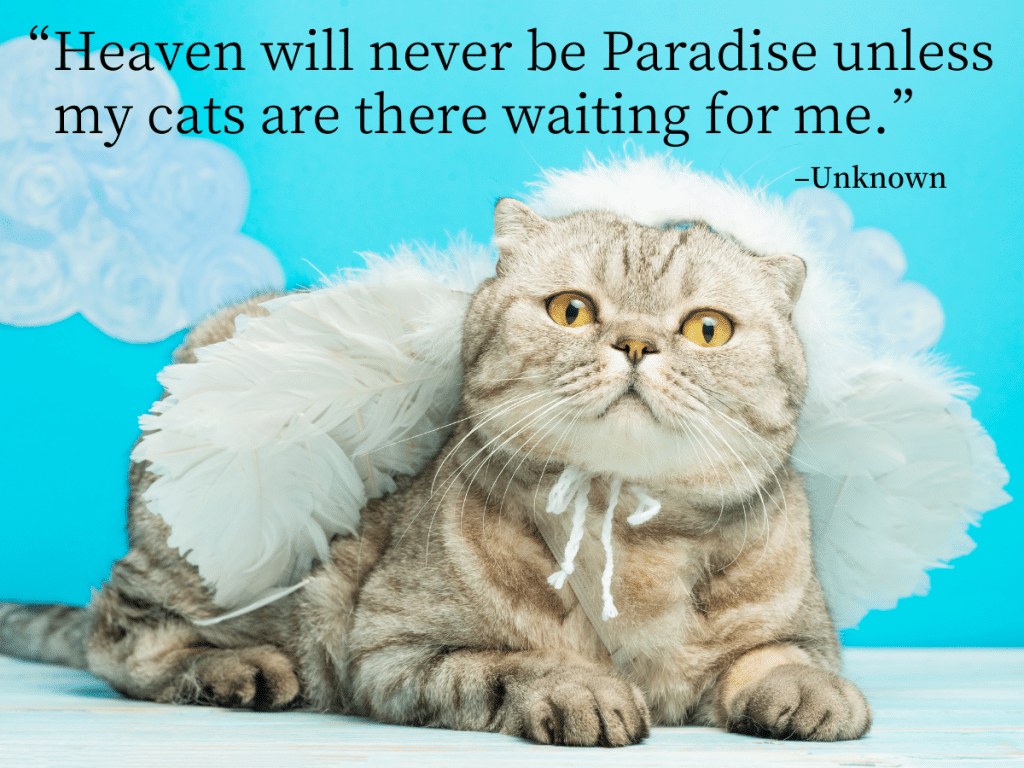 cat quotes -Heaven will never be Paradise unless my cats are there waiting for me.