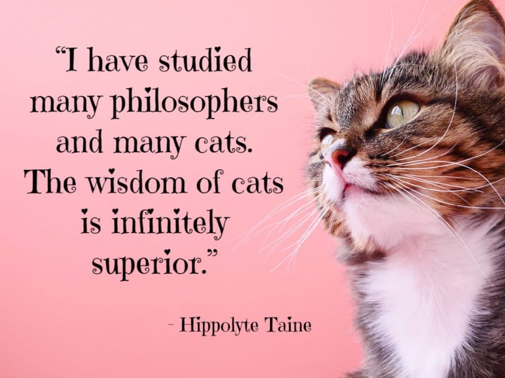 """cat quotes - I have studied many philosophers and many cats. The wisdom of cats is infinitely superior."""""""