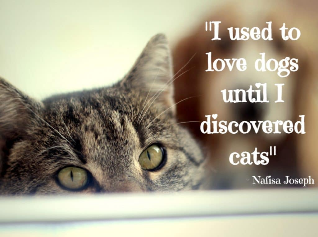 cat quotes- I used to love dogs until I discovered cats