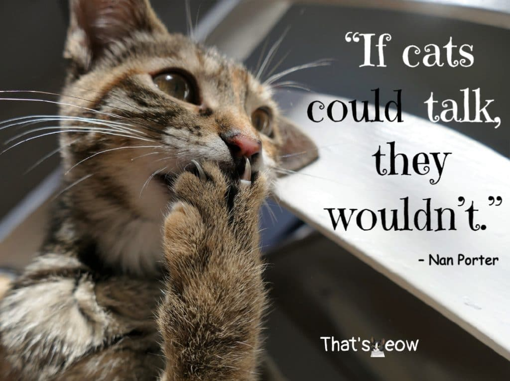 cat quotes - If cats could talk, they wouldn't