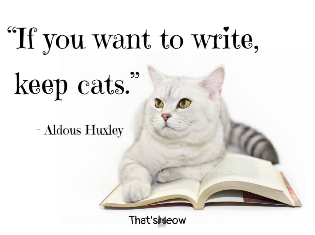 cat quotes - If you want to write, keep cats