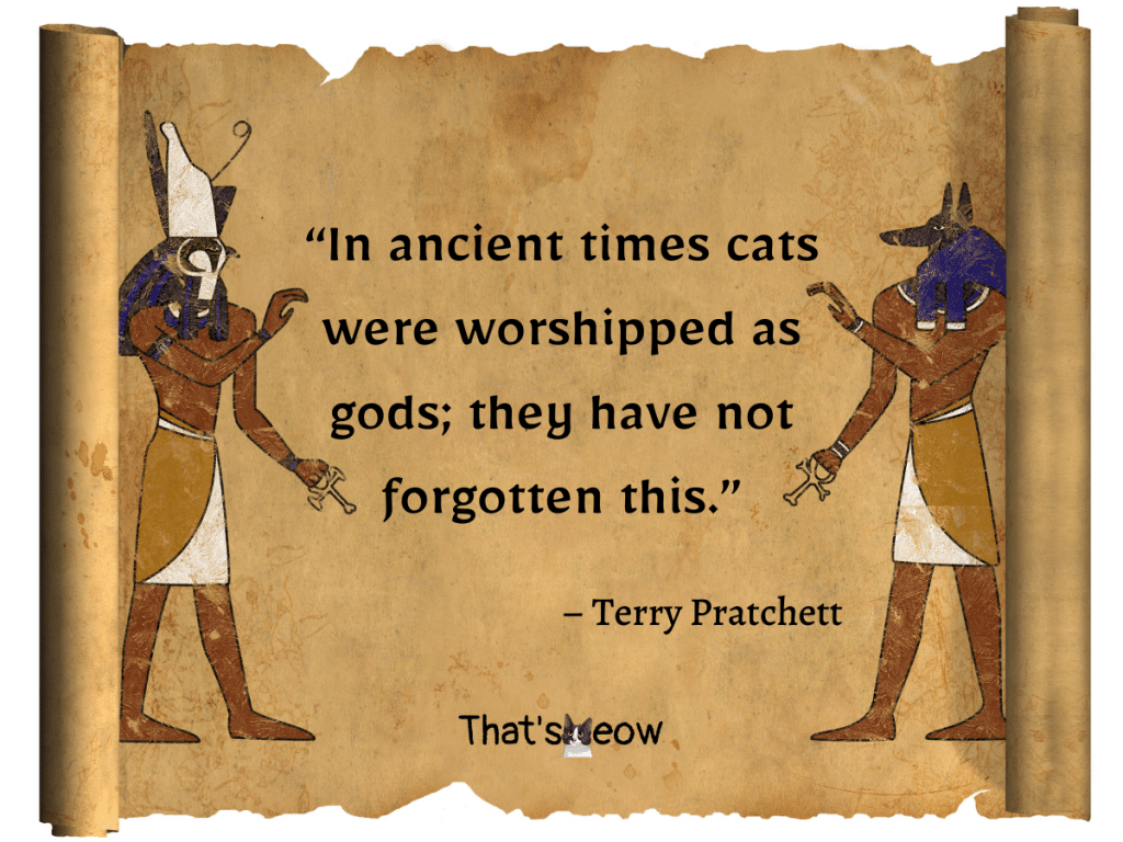 cat quotes - In ancient times cats were worshipped as gods; they have not forgotten this.