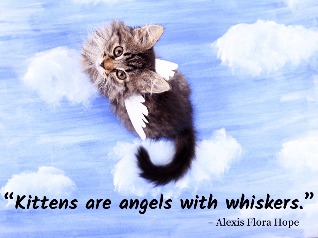 cat quotes - Kittens are angels with whiskers