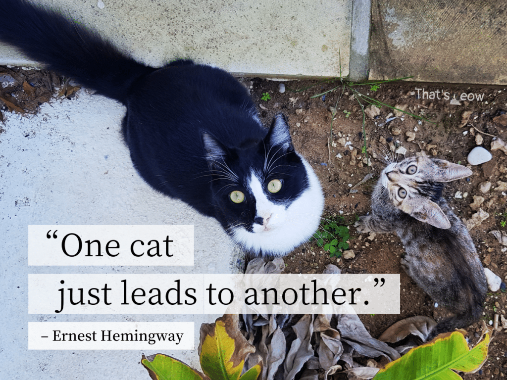 cat quotes - One cat just leads to another
